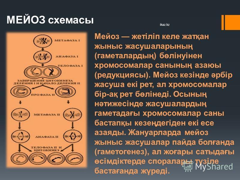 МЕЙОЗ схемасы Мейоз жетіліп кале жатқан жыныс жасушаларының (гаметалардың) бөлінуінен хромосомалар санының азаюы (редукциясы). Мейоз кезінде әрбір жасуша екі рет, ал хромосомалар бір-ақ рет бөлінеді. Осының нәтижесінде жасушалардың гаметадағы хромосо