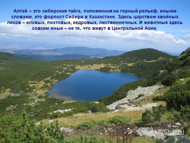 Алтай – это сибирская тайга, положенная на горный рельеф, иными словами, это форпост Сибири в Казахстане. Здесь царством хвойных лесов – еловых, пихтовых, кедровых, лиственничных. И животные здесь совсем иные – не те, что живут в Центральной Азии.