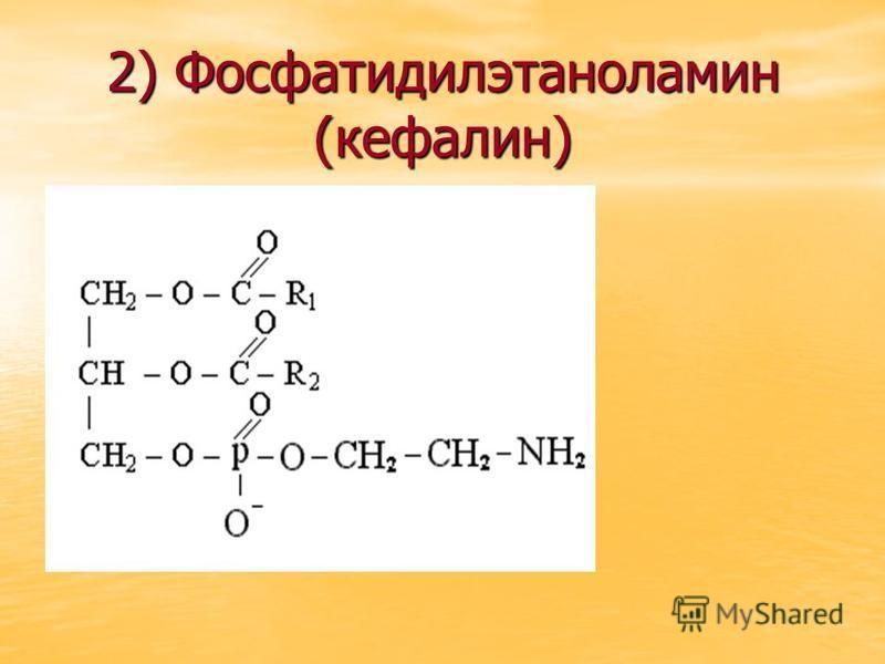 2) Фосфатидилэтаноламин (кефалин)