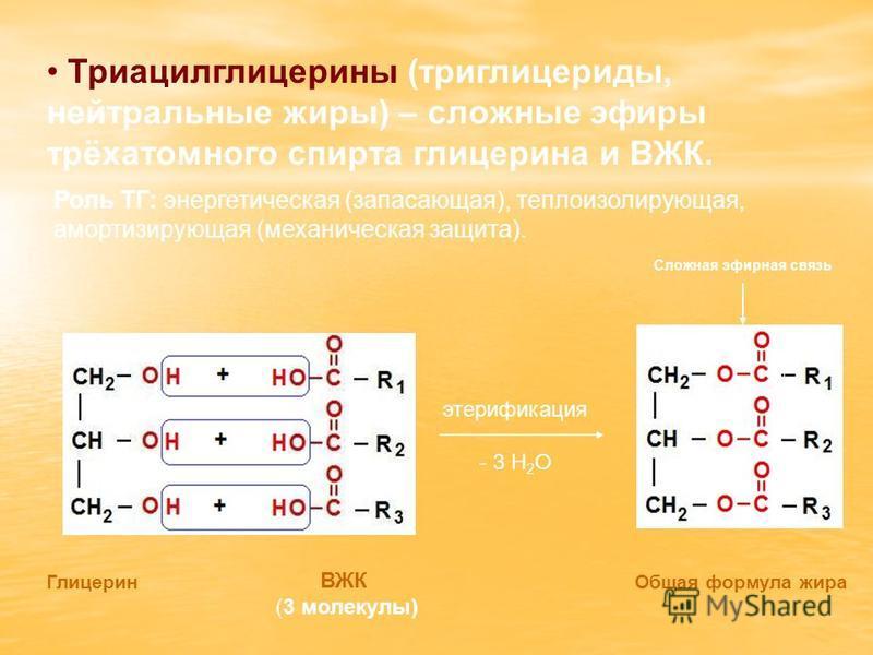 Триацилглицерины (триглицериды, нейтральные жиры) – сложные эфиры трёхатомного спирта глицерина и ВЖК. Роль ТГ: энергетическая (запасающая), теплоизолирующая, амортизирующая (механическая защита). Глицерин Общая формула жира ВЖК (3 молекулы) Сложная