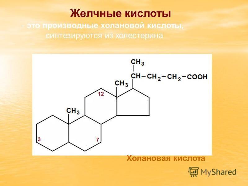 Желчные кислоты - это производные холановой кислоты, синтезируются из холестерина Холановая кислота