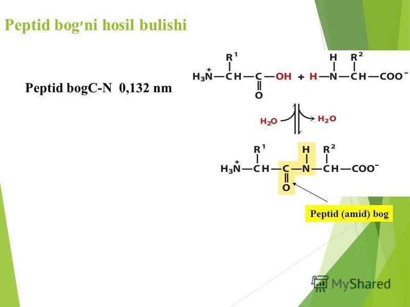 Peptid bog׳ni hosil bulishi Peptid (amid) bog Peptid bogC-N 0,132 nm