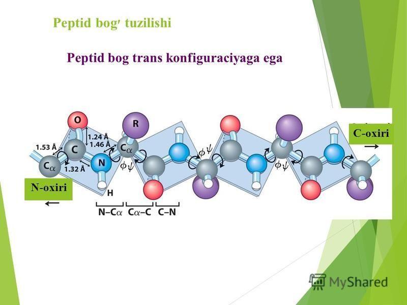 Peptid bog׳ tuzilishi N-oxiri C-oxiri Peptid bog trans konfiguraciyaga ega