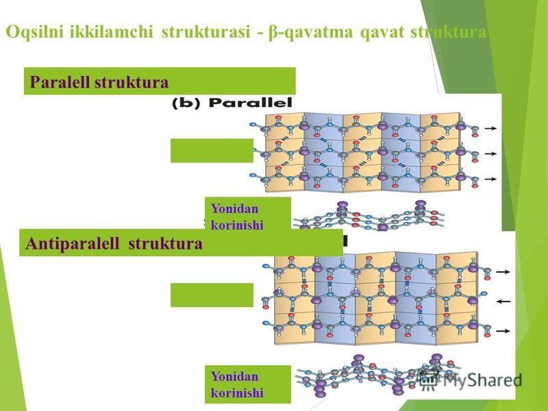 Oqsilni ikkilamchi strukturasi - β-qavatma qavat struktura Paralell struktura Antiparalell struktura Yonidan korinishi