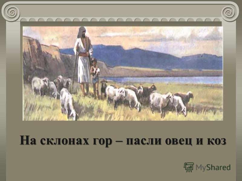На склонах гор – пасли овец и коз