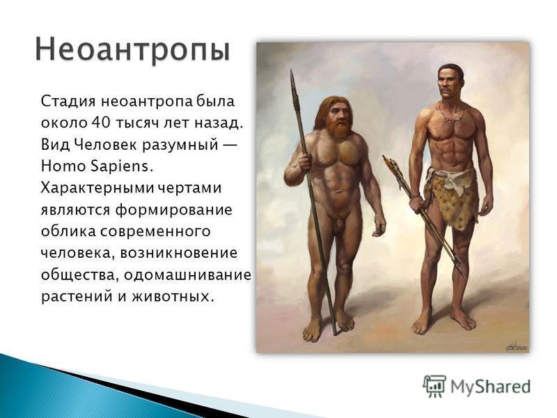 Стадия неоантропа была около 40 тысяч лет назад. Вид Человек разумный Homo Sapiens. Характерными чертами являются формирование облика современного человека, возникновение общества, одомашнивание растений и животных.