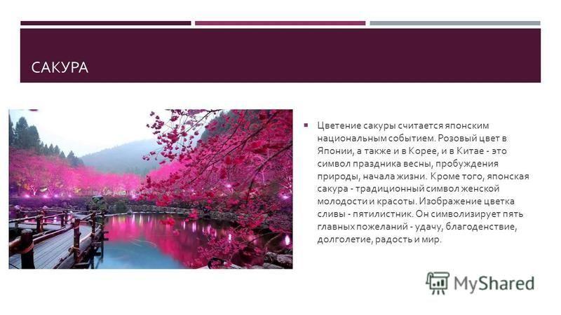 САКУРА Цветение сакуры считается японским национальным событием. Розовый цвет в Японии, а также и в Корее, и в Китае - это символ праздника весны, пробуждения природы, начала жизни. Кроме того, японская сакура - традиционный символ женской молодости