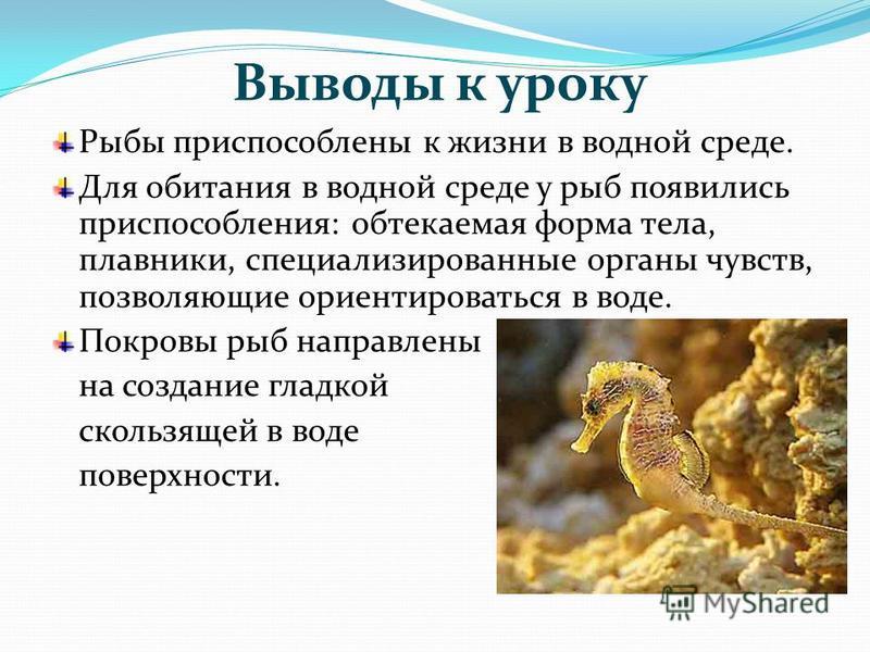 Выводы к уроку Рыбы приспособлены к жизни в водной среде. Для обитания в водной среде у рыб появились приспособления: обтекаемая форма тела, плавники, специализированные органы чувств, позволяющие ориентироваться в воде. Покровы рыб направлены на соз