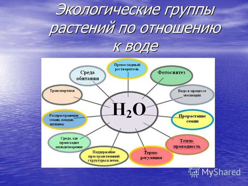 Экологические группы растений по отношению к воде