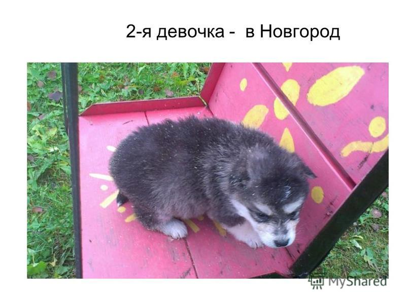 2-я девочка - в Новгород