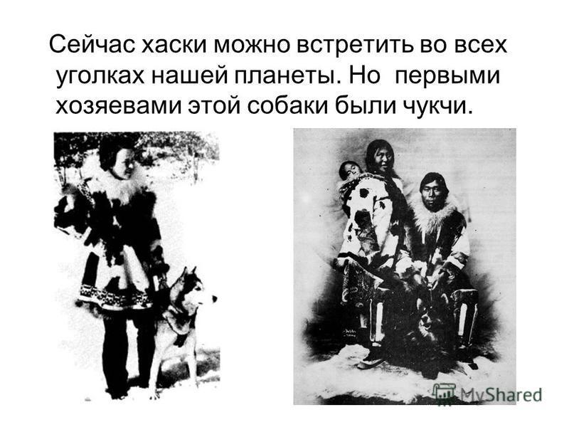 Сейчас хаски можно встретить во всех уголках нашей планеты. Но первыми хозяевами этой собаки были чукчи.