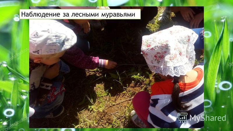 Наблюдение за лесными муравьями