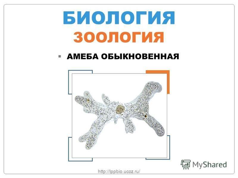 БИОЛОГИЯ ЗООЛОГИЯ АМЕБА ОБЫКНОВЕННАЯ http://lppbio.ucoz.ru/