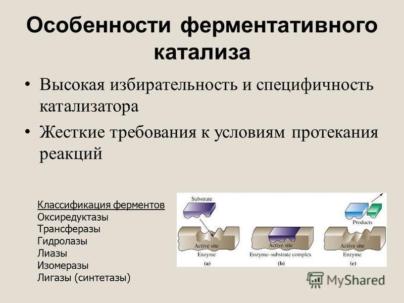 Особенности ферментативного катализа Высокая избирательность и специфичность катализатора Жесткие требования к условиям протекания реакций Классификация ферментов Оксиредуктазы Трансферазы Гидролазы Лиазы Изомеразы Лигазы (синтетазы)