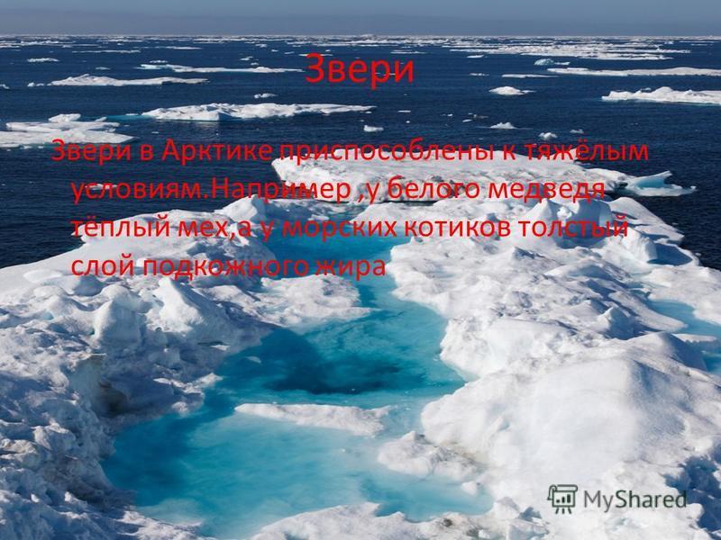 Звери Звери в Арктике приспособлены к тяжёлым условиям.Например,у белого медведя тёплый мех,а у морских котиков толстый слой подкожного жира