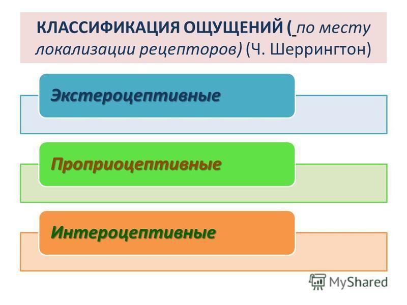 КЛАССИФИКАЦИЯ ОЩУЩЕНИЙ ( по месту локализации рецепторов) (Ч. Шеррингтон) Экстероцептивные Проприоцептивные Интероцептивные