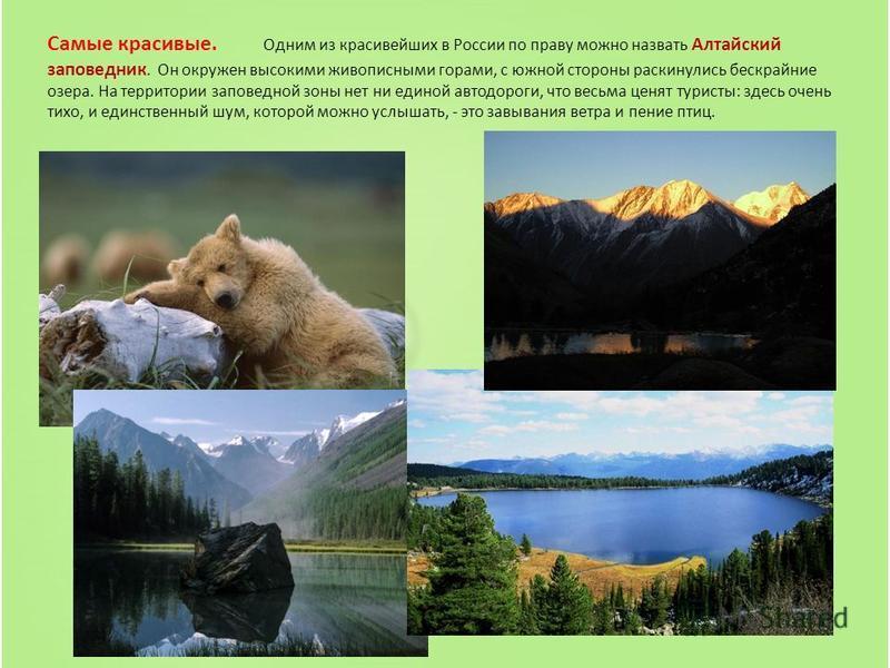 Самые красивые. Одним из красивейших в России по праву можно назвать Алтайский заповедник. Он окружен высокими живописными горами, с южной стороны раскинулись бескрайние озера. На территории заповедной зоны нет ни единой автодороги, что весьма ценят