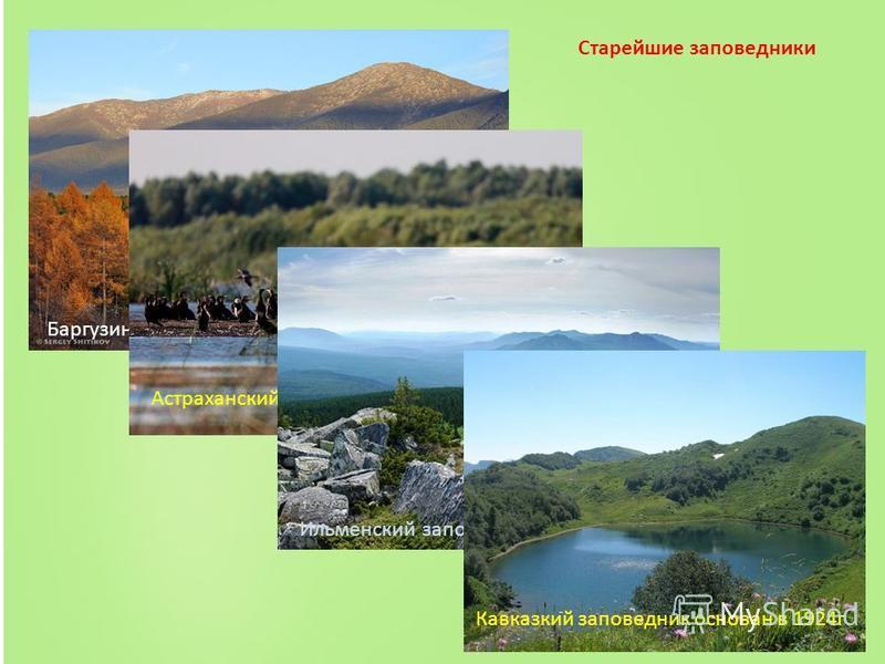Баргузинский заповедник – основан в 1916 г. Астраханский заповедник основан в 1919 г. Ильменский заповедник основан в 1920 г. Кавказкий заповедник основан в 1924 г. Старейшие заповедники