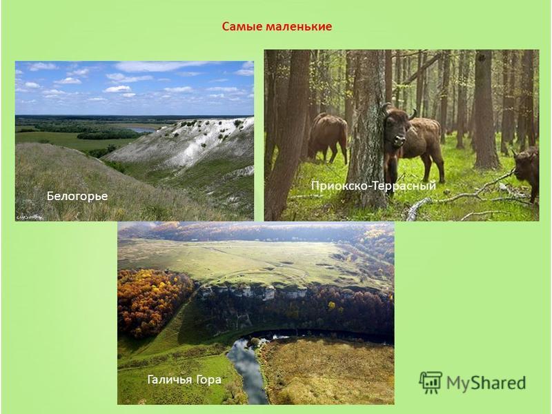 Самые маленькие Белогорье Приокско-Террасный Галичья Гора