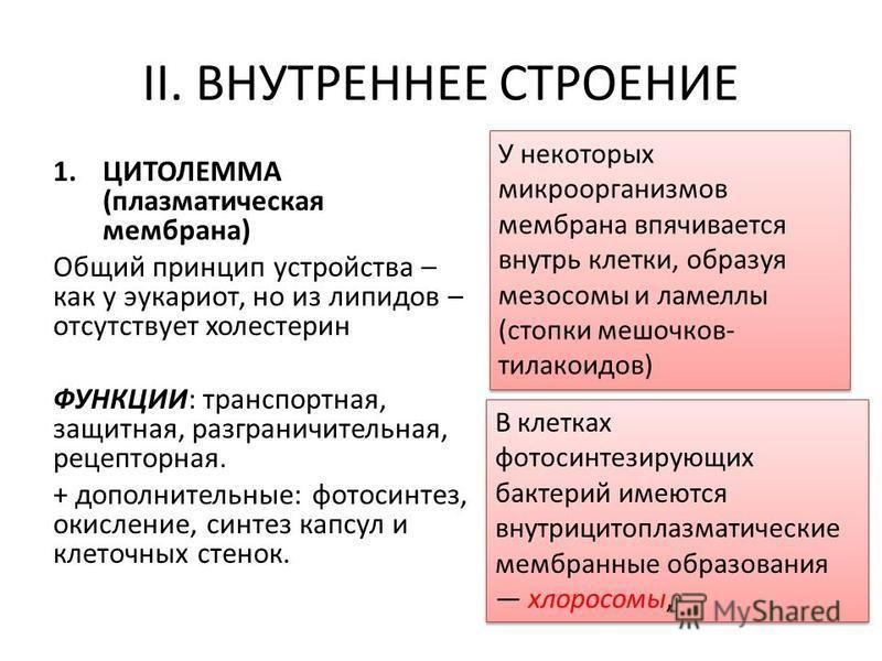 II. ВНУТРЕННЕЕ СТРОЕНИЕ 1. ЦИТОЛЕММА (плазматическая мембрана) Общий принцип устройства – как у эукариот, но из липидов – отсутствует холестерин ФУНКЦИИ: транспортная, защитная, разграничительная, рецепторная. + дополнительные: фотосинтез, окисление,