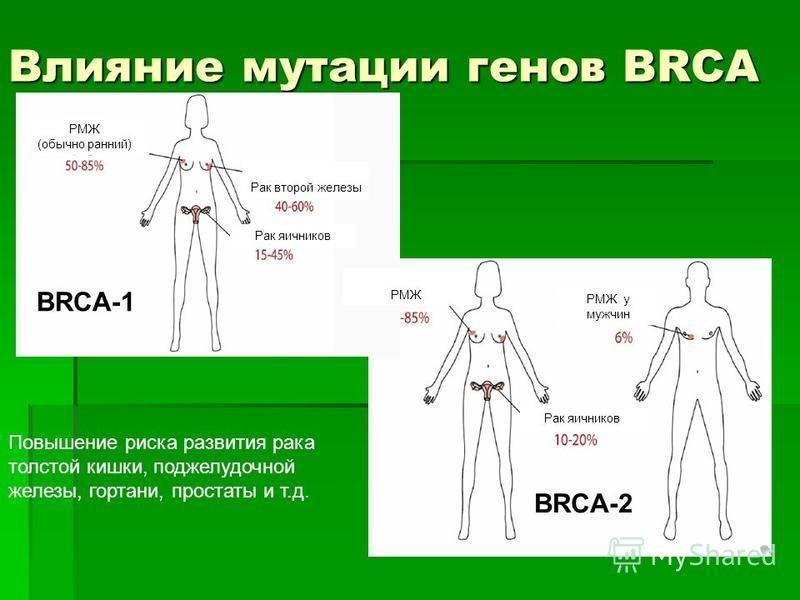Влияние мутации генов BRCA Повышение риска развития рака толстой кишки, поджелудочной железы, гортани, простаты и т.д. РМЖ (обычно ранний) Рак второй железы Рак яичников BRCA-1 BRCA-2 РМЖ РМЖ у мужчин