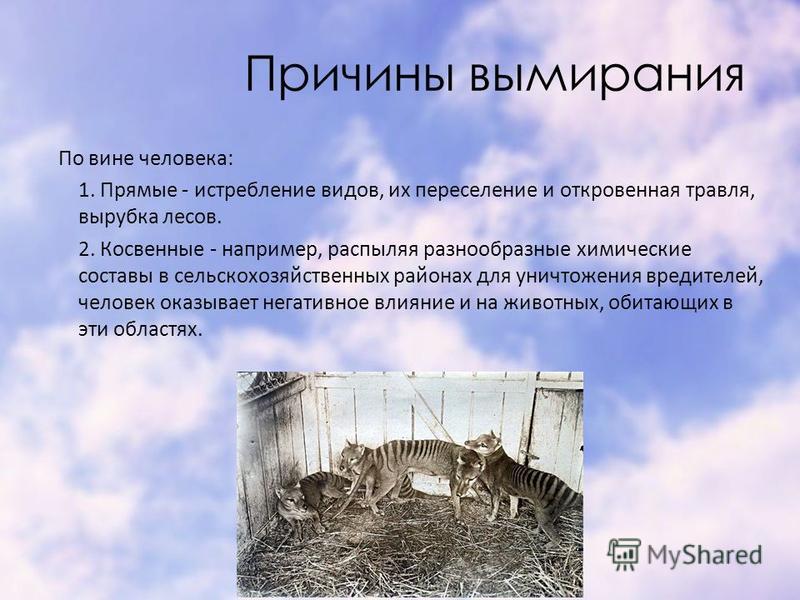 Причины вымирания По вине человека: 1. Прямые - истребление видов, их переселение и откровенная травля, вырубка лесов. 2. Косвенные - например, распыляя разнообразные химические составы в сельскохозяйственных районах для уничтожения вредителей, челов