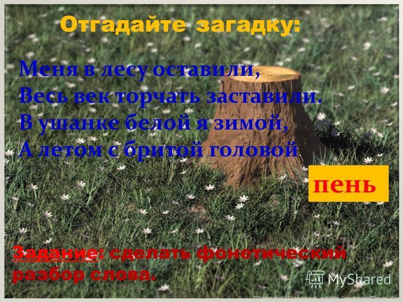 Отгадайте загадку: Меня в лесу оставили, Весь век торчать заставили. В ушанке белой я зимой, А летом с бритой головой. пень Задание: сделать фонетический разбор слова.