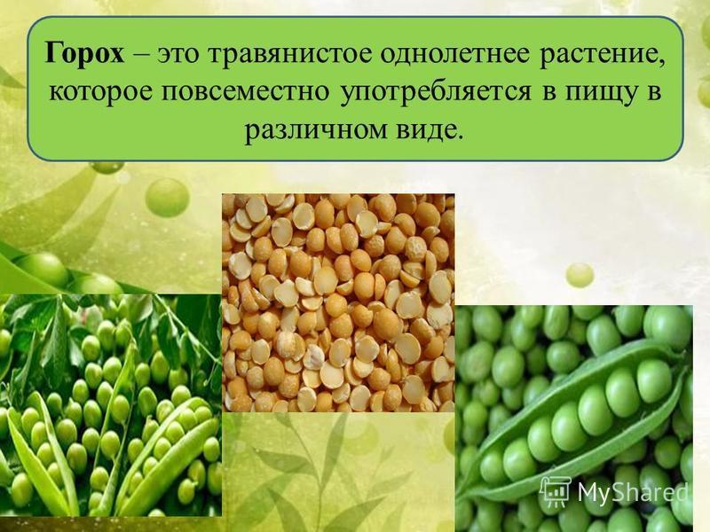 Горох – это травянистое однолетнее растение, которое повсеместно употребляется в пищу в различном виде.