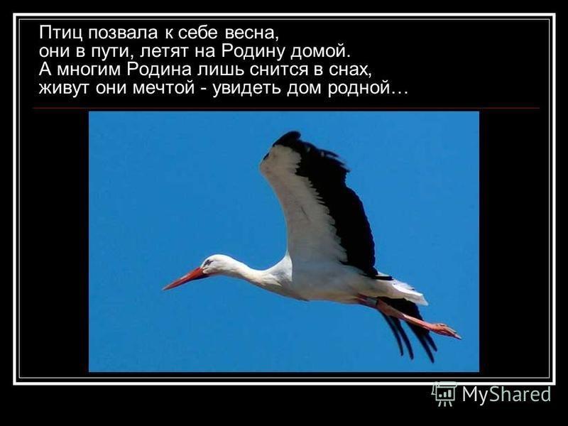 Птиц позвала к себе весна, они в пути, летят на Родину домой. А многим Родина лишь снится в снах, живут они мечтой - увидеть дом родной…