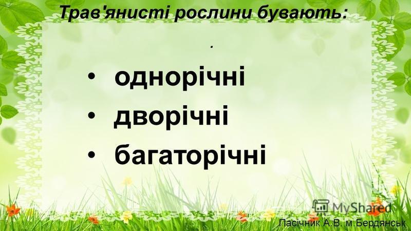 Трав'янисті рослини бувають:. однорічні дворічні багаторічні Пасічник А.В. м.Бердянськ