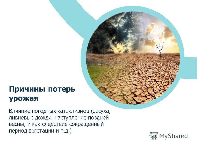 Влияние погодных катаклизмов (засуха, ливневые дожди, наступление поздней весны, и как следствие сокращенный период вегетации и т.д.) Причины потерь урожая