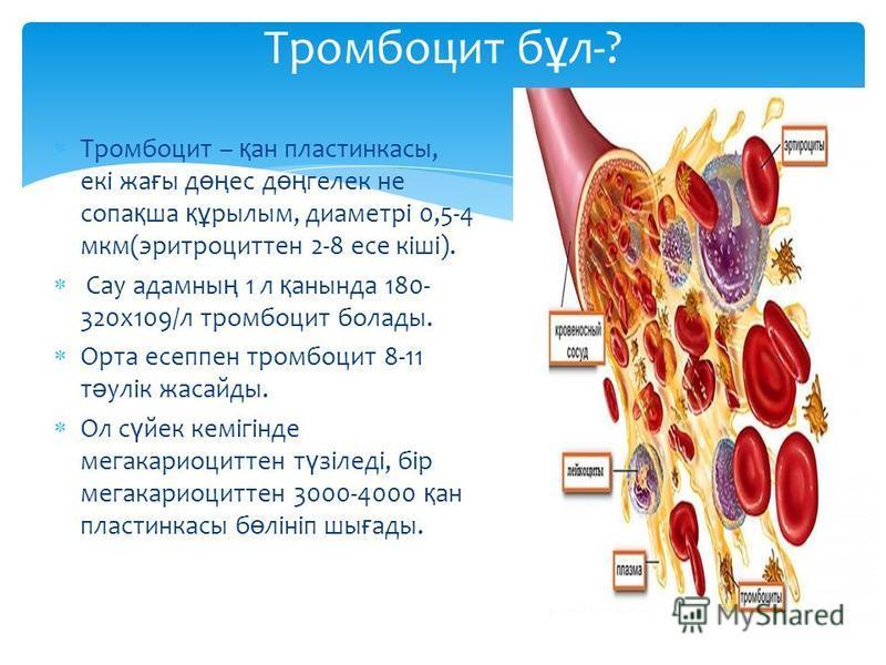 Тромбоцит б ұ л-? Тромбоцит – қ ан пластинкасы, екі жа ғ ы д өң ес д өң гелек не сопа қ ша құ рылым, диаметрі 0,5-4 мкм(эритроциттен 2-8 есе кіші). Сау адамны ң 1 л қ анында 180- 320х109/л тромбоцит болады. Орта есеппен тромбоцит 8-11 т ә улік жасайд