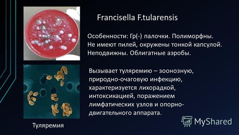 Francisella F.tularensis Туляремия Особенности: Гр(-) палочки. Полиморфны. Не имеют пилей, окружены тонкой капсулой. Неподвижны. Облигатные аэробы. Вызывает туляремию – зоонозную, природно-очаговую инфекцию, характеризуется лихорадкой, интоксикацией,