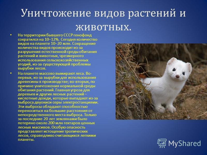 Уничтожение видов растений и животных. На территории бывшего СССР генофонд сократился на 10–12%. Сегодня количество видов на планете 10–20 млн. Сокращение количества видов происходит из-за разрушения естественной среды обитания растений и животных, ч