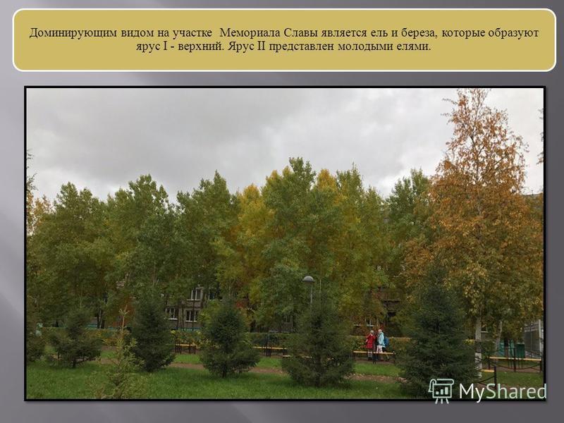 Доминирующим видом на участке Мемориала Славы является ель и береза, которые образуют ярус I - верхний. Ярус II представлен молодыми елями.