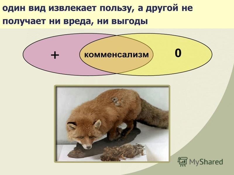один вид извлекает пользу, а другой не получает ни вреда, ни выгоды