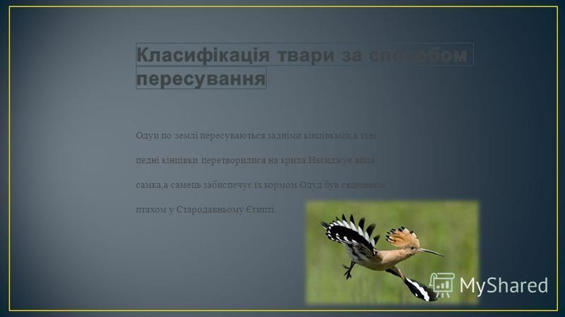 Одуи по землі пересуваються задніми кінцівками,а їхні педні кінцівки перетворилися на крила.Насиджуе яйця самка,а самець забиспечує їх кормом.Одуд був сященним птахом у Стародавньому Єгипті.