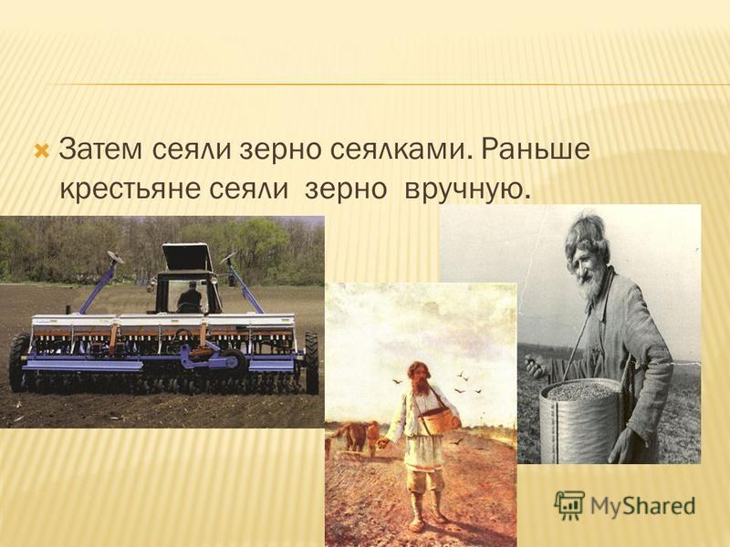 Затем сеяли зерно сеялками. Раньше крестьяне сеяли зерно вручную.