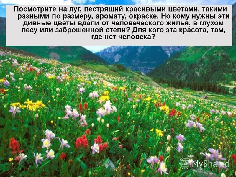 Посмотрите на луг, пестрящий красивыми цветами, такими разными по размеру, аромату, окраске. Но кому нужны эти дивные цветы вдали от человеческого жилья, в глухом лесу или заброшенной степи? Для кого эта красота, там, где нет человека?
