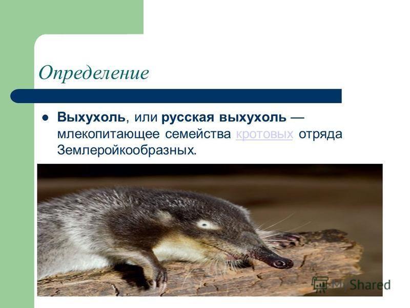 Определение Выхухоль, или русская выхухоль млекопитающее семейства кротовых отряда Землеройкообразных.кротовых
