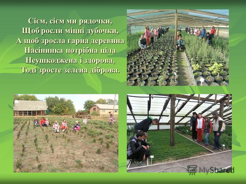 Сієм, сієм ми рядочки, Щоб росли міцні дубочки, А щоб зросла гарна деревина Насінинка потрібна ціла Неушкоджена і здорова, Тоді зросте зелена діброва.