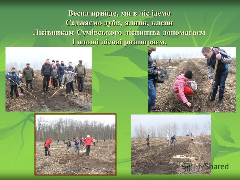 Весна прийде, ми в ліс ідемо Саджаємо дуби, ялини, клени Лісівникам Сумівського лісництва допомагаєм І площі лісові розширяєм.