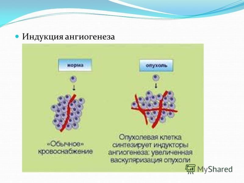 Индукция ангиогенеза