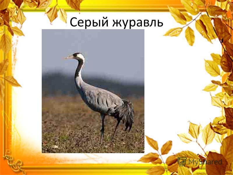 Узнайте перелетных птиц по голосам