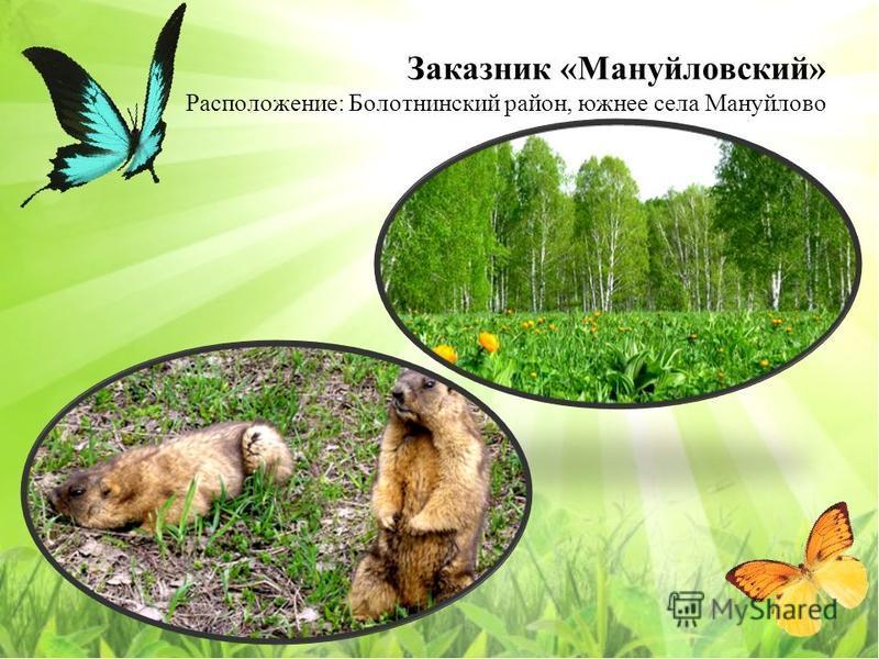 Заказнак «Мануйловский» Расположение: Болотнинский район, южнее села Мануйлово