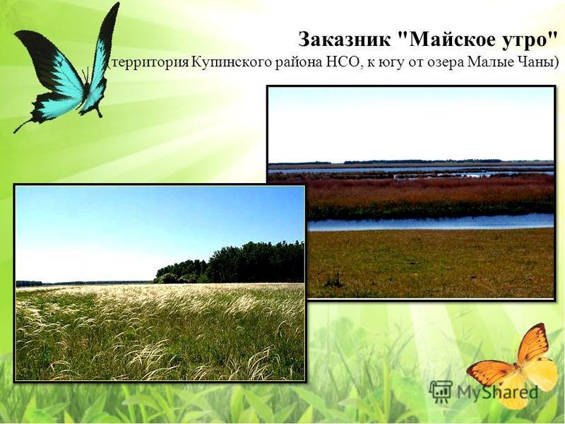 Заказнак Майское утро (территория Купинского района НСО, к югу от озера Малые Чаны)