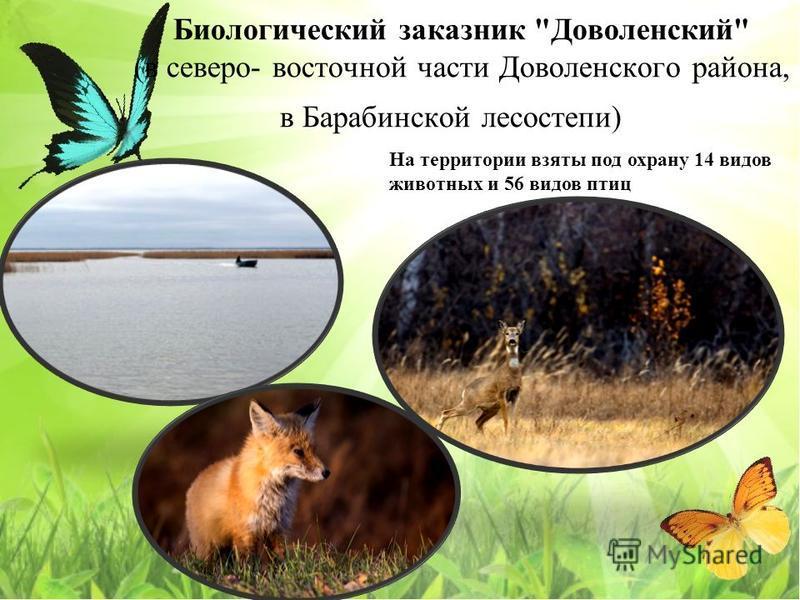 Биологический заказнак Доволенский (в северо- восточной части Доволенского района, в Барабинской лесостепи) На территории взяты под охрану 14 видов животных и 56 видов птиц