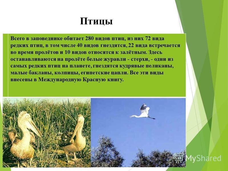 Птицы Всего в заповеднике обитает 280 видов птиц, из них 72 вида редких птиц, в том числе 40 видов гнездятся, 22 вида встречается во время пролётов и 10 видов относятся к залётным. Здесь останавливаются на пролёте белые журавли - стерхи, - одни из са