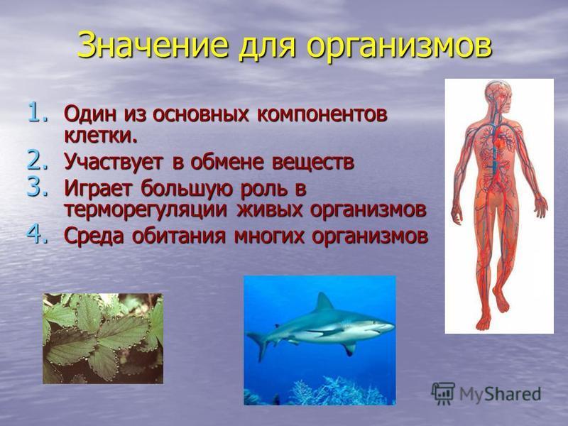 Значение для организмов 1. Один из основных компонентов клетки. 2. Участвует в обмене веществ 3. Играет большую роль в терморегуляции живых организмов 4. Среда обитания многих организмов
