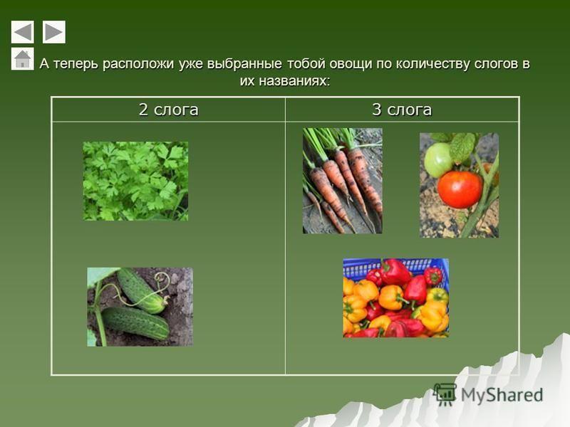 А теперь расположи уже выбранные тобой овощи по количеству слогов в их названиях: 2 слога 3 слога